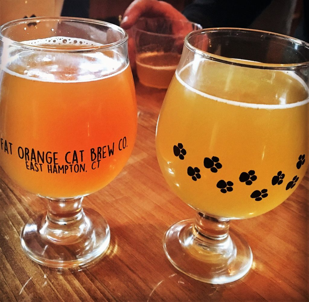 brewery, connecticut, beer, fat orange cat, craft beer, brew, central connecticut