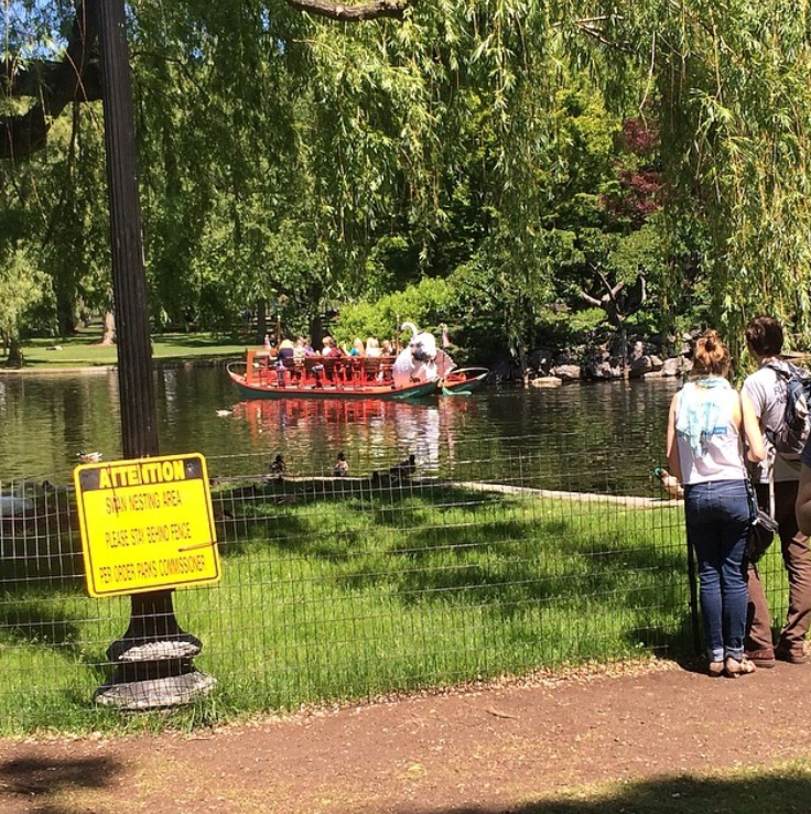 swan boats; boston